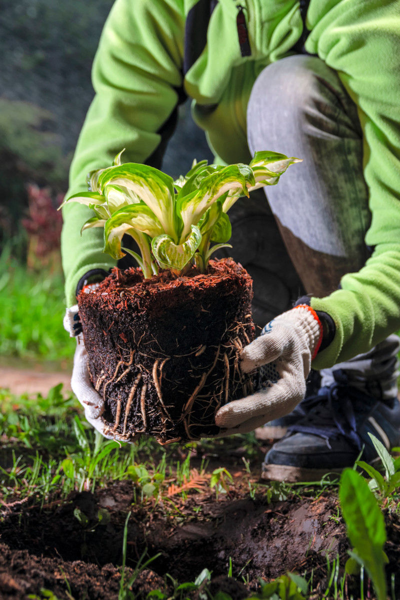 Gardener woman planting seedling flowers in the spring garden | Hope Grows | Premium Lawn and Landscape Services in Indianapolis